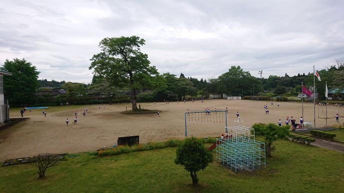 新緑の校庭